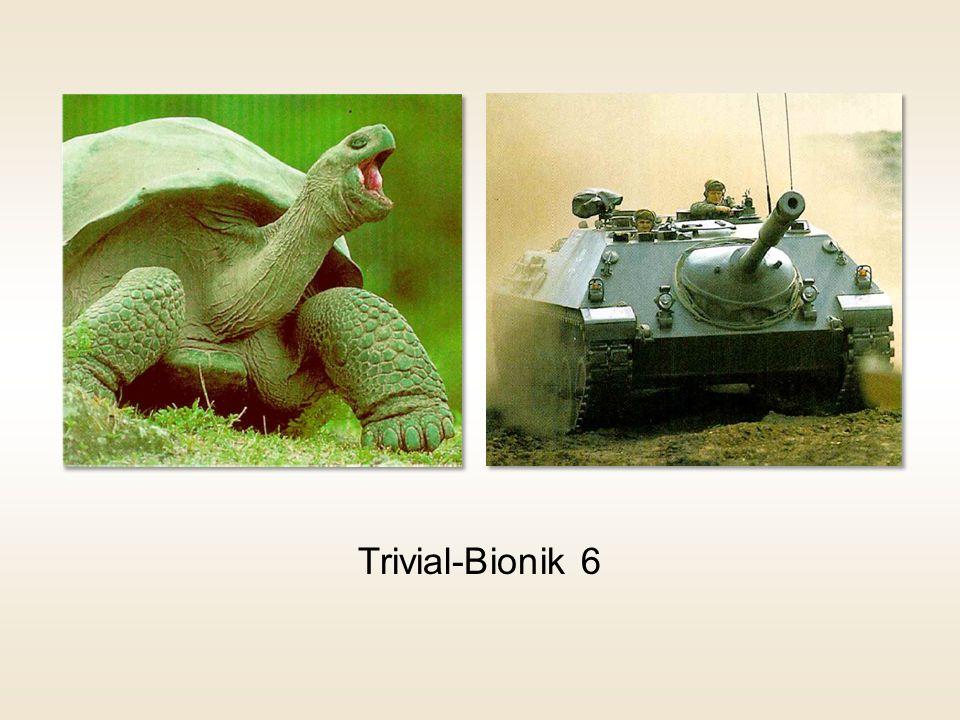 Trivial-Bionik 6