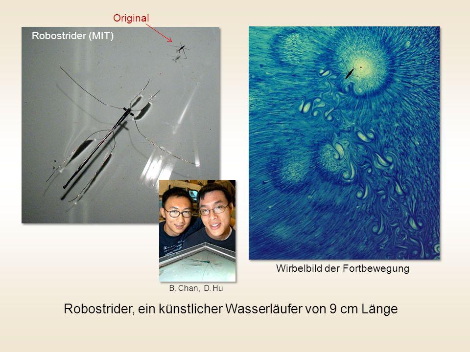 Robostrider (MIT) Robostrider, ein künstlicher Wasserläufer von 9 cm Länge Wirbelbild der Fortbewegung B. Chan, D. Hu Original