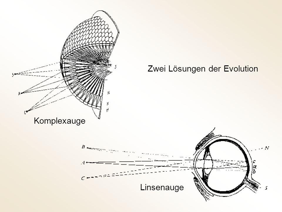 Multimodalität der Augen-Evolution