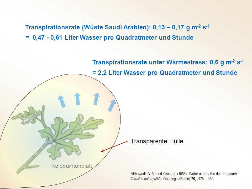 Transpirationsrate (Wüste Saudi Arabien): 0,13 – 0,17 g m -2 s -1 = 0,47 - 0,61 Liter Wasser pro Quadratmeter und Stunde Transpirationsrate unter Wärm
