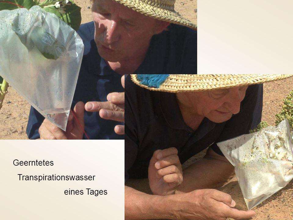 BionischeTranspirationspumpe Primitiver Nachbau Fördermenge eines Tages Förderhöhe 40cm