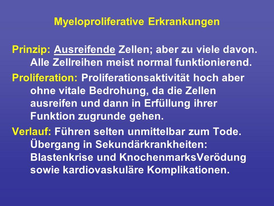Myeloproliferative Erkrankungen Prinzip: Ausreifende Zellen; aber zu viele davon. Alle Zellreihen meist normal funktionierend. Proliferation: Prolifer
