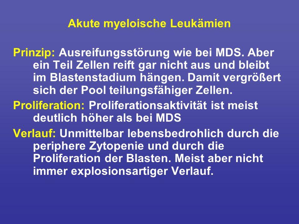 Akute myeloische Leukämien Prinzip: Ausreifungsstörung wie bei MDS. Aber ein Teil Zellen reift gar nicht aus und bleibt im Blastenstadium hängen. Dami