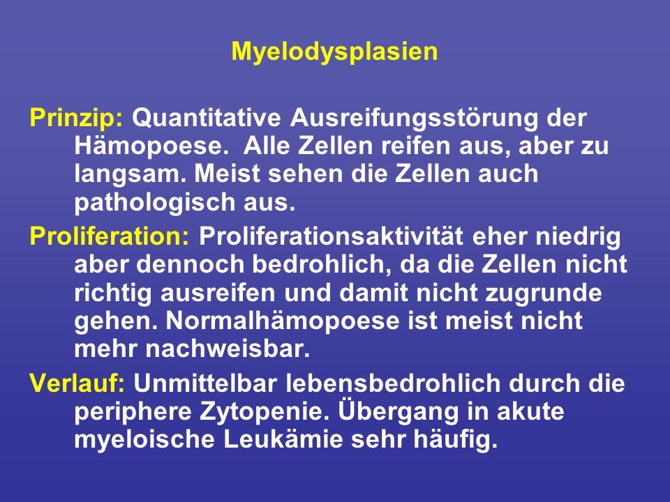 Myelodysplasien Prinzip: Quantitative Ausreifungsstörung der Hämopoese. Alle Zellen reifen aus, aber zu langsam. Meist sehen die Zellen auch pathologi
