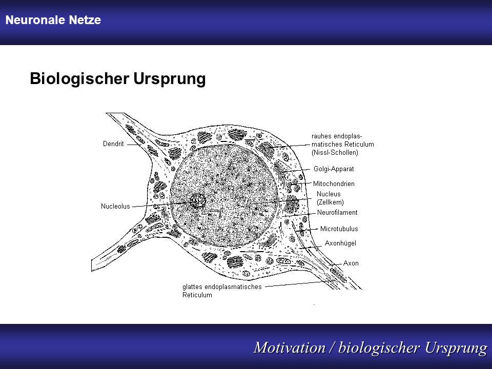 Neuronale Netze Motivation / biologischer Ursprung Biologischer Ursprung