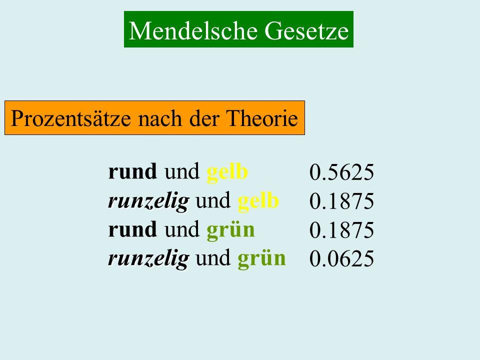 Mendelsche Gesetze rund und gelb runzelig runzelig und gelb rund und grün runzelig runzelig und grün 0.5625 0.1875 0.0625 Prozentsätze nach der Theori
