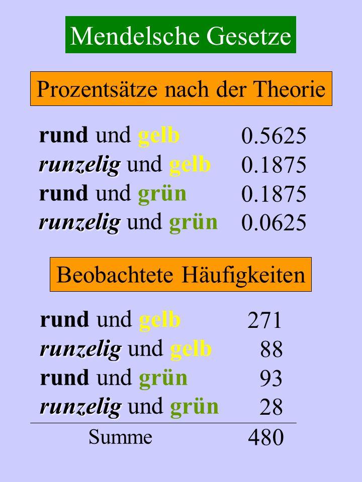 Mendelsche Gesetze rund und gelb runzelig runzelig und gelb rund und grün runzelig runzelig und grün 0.5625 0.1875 0.0625 rund und gelb runzelig runze