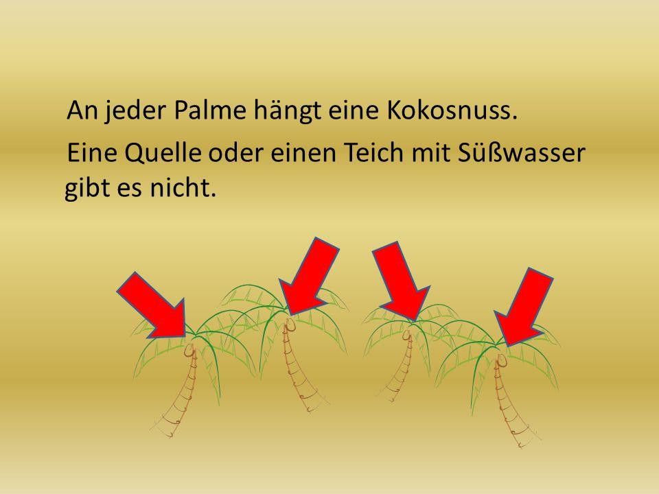 An jeder Palme hängt eine Kokosnuss. Eine Quelle oder einen Teich mit Süßwasser gibt es nicht.