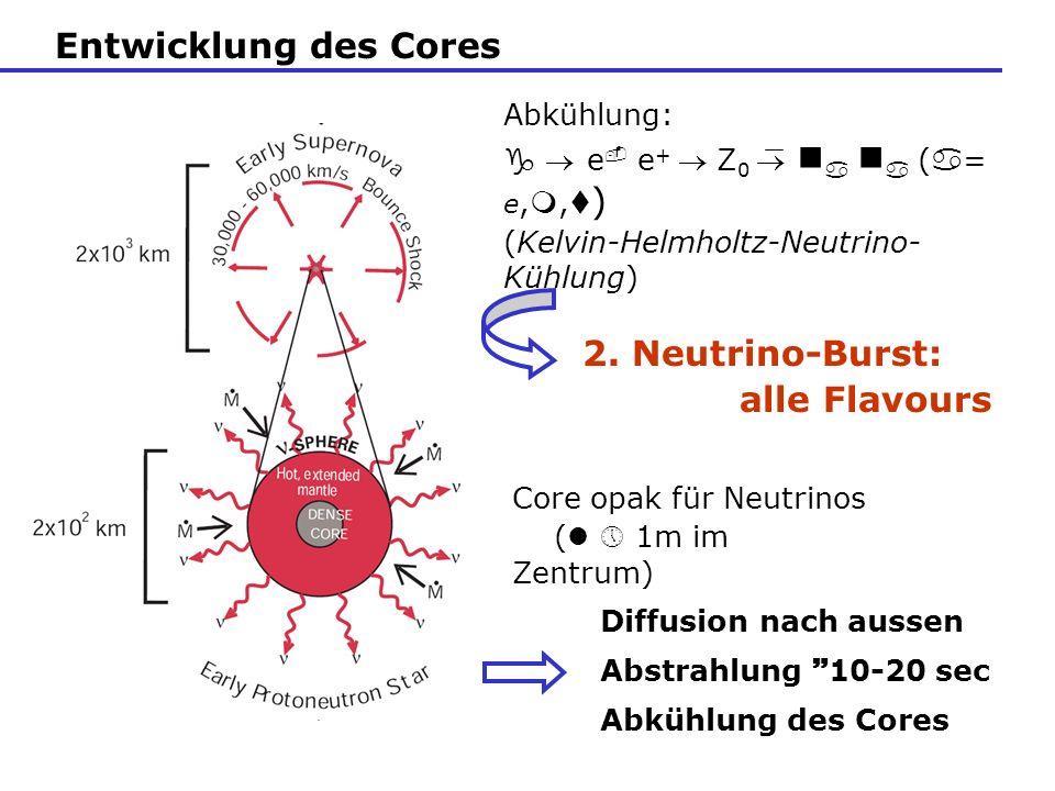 Entwicklung des Cores Abkühlung: g e e + Z 0 ( = e,, ) (Kelvin-Helmholtz-Neutrino- Kühlung) Diffusion nach aussen Abstrahlung 10-20 sec Abkühlung des
