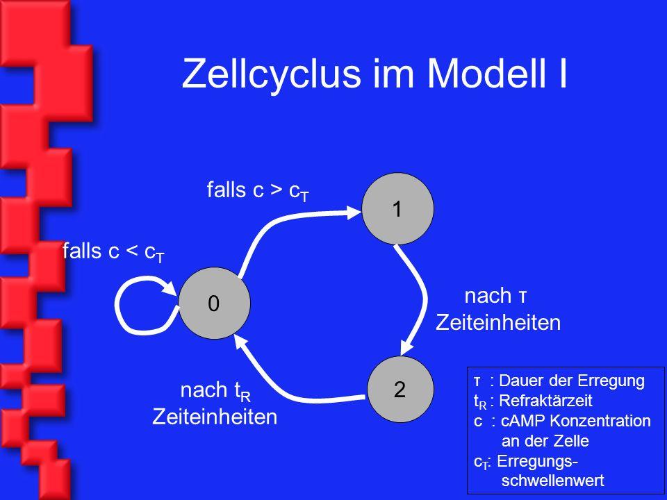 Zellcyclus im Modell I 1 2 0 falls c > c T nach τ Zeiteinheiten nach t R Zeiteinheiten falls c < c T τ : Dauer der Erregung t R : Refraktärzeit c : cAMP Konzentration an der Zelle c T : Erregungs- schwellenwert