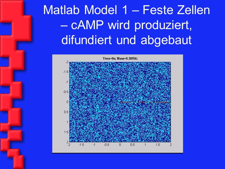 Matlab Model 1 – Feste Zellen – cAMP wird produziert, difundiert und abgebaut