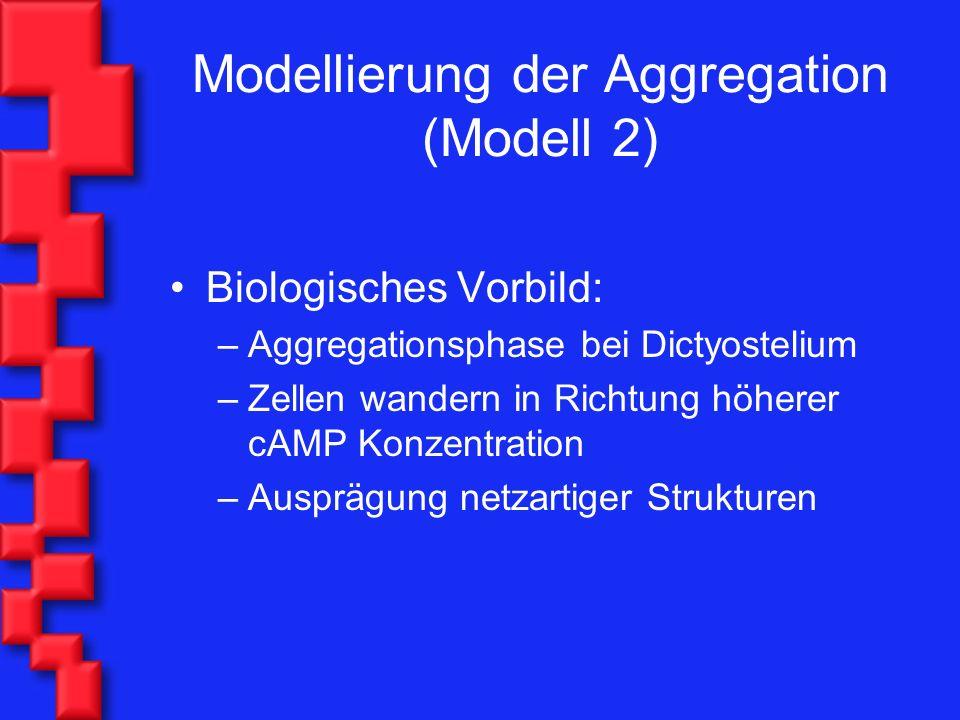 Modellierung der Aggregation (Modell 2) Biologisches Vorbild: –Aggregationsphase bei Dictyostelium –Zellen wandern in Richtung höherer cAMP Konzentration –Ausprägung netzartiger Strukturen