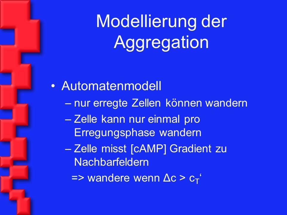 Modellierung der Aggregation Automatenmodell –nur erregte Zellen können wandern –Zelle kann nur einmal pro Erregungsphase wandern –Zelle misst [cAMP] Gradient zu Nachbarfeldern => wandere wenn Δc > c T