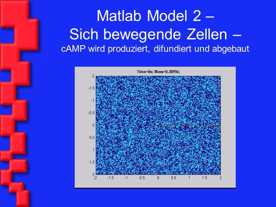 Matlab Model 2 – Sich bewegende Zellen – cAMP wird produziert, difundiert und abgebaut