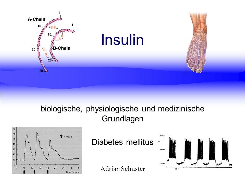 Adrian Schuster Insulin biologische, physiologische und medizinische Grundlagen Diabetes mellitus