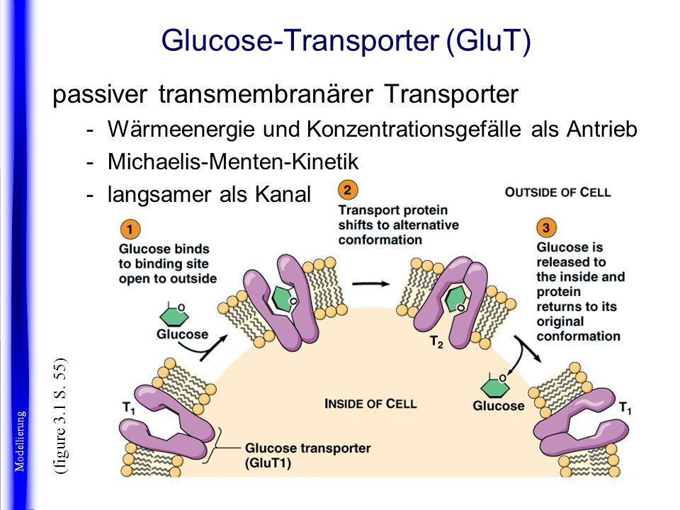 Glucose-Transporter (GluT) passiver transmembranärer Transporter -Wärmeenergie und Konzentrationsgefälle als Antrieb -Michaelis-Menten-Kinetik -langsa