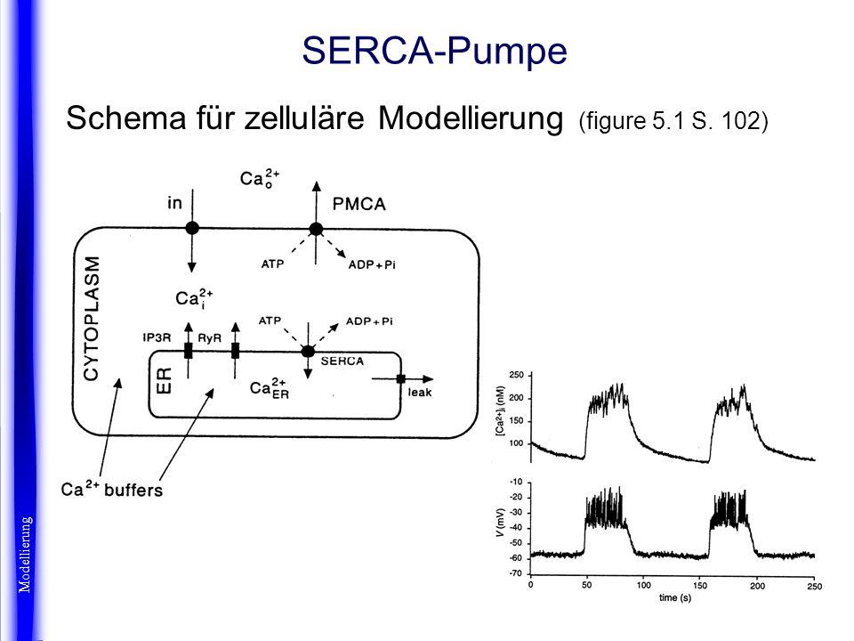 SERCA-Pumpe Schema für zelluläre Modellierung (figure 5.1 S. 102) Modellierung