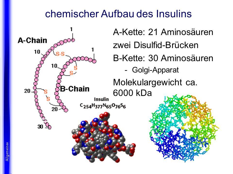 A-Kette: 21 Aminosäuren zwei Disulfid-Brücken B-Kette: 30 Aminosäuren -Golgi-Apparat Molekulargewicht ca. 6000 kDa chemischer Aufbau des Insulins Allg