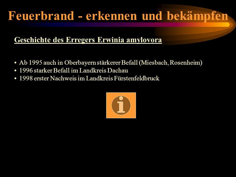 Feuerbrand - erkennen und bekämpfen Geschichte des Erregers Erwinia amylovora Ab 1995 auch in Oberbayern stärkerer Befall (Miesbach, Rosenheim) 1996 s
