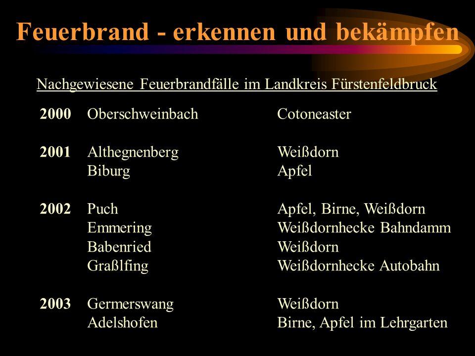 Feuerbrand - erkennen und bekämpfen Nachgewiesene Feuerbrandfälle im Landkreis Fürstenfeldbruck 2000OberschweinbachCotoneaster 2001AlthegnenbergWeißdo