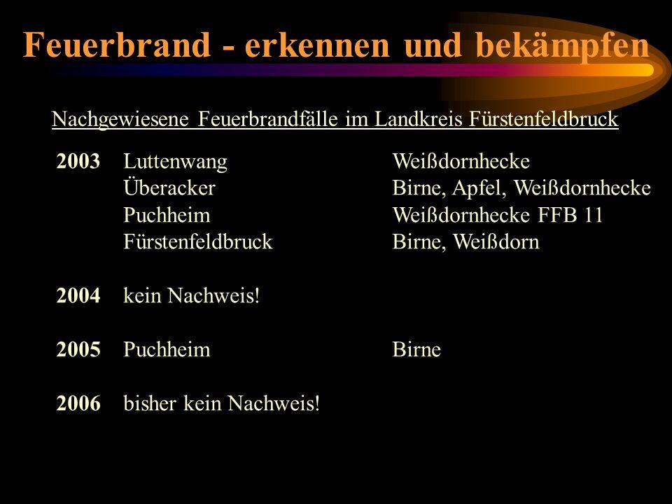 Feuerbrand - erkennen und bekämpfen 2003LuttenwangWeißdornhecke ÜberackerBirne, Apfel, Weißdornhecke PuchheimWeißdornhecke FFB 11 FürstenfeldbruckBirn