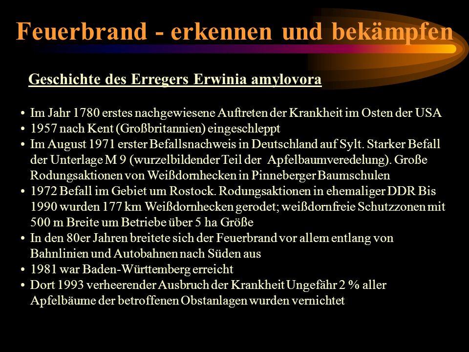 Feuerbrand - erkennen und bekämpfen Geschichte des Erregers Erwinia amylovora Im Jahr 1780 erstes nachgewiesene Auftreten der Krankheit im Osten der U