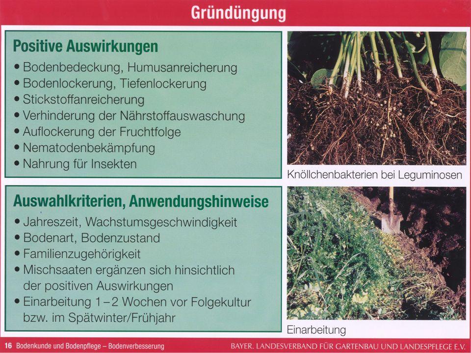 Gründüngungspflanzen