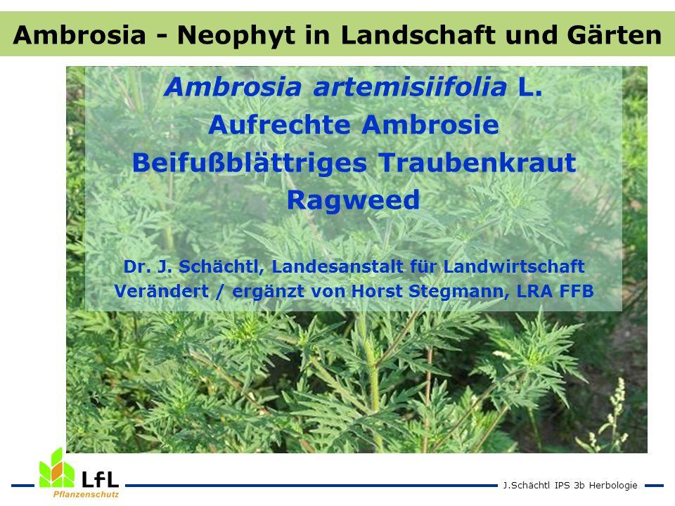 J.Schächtl IPS 3b Herbologie Ambrosia artemisiifolia L. Aufrechte Ambrosie Beifußblättriges Traubenkraut Ragweed Dr. J. Schächtl, Landesanstalt für La