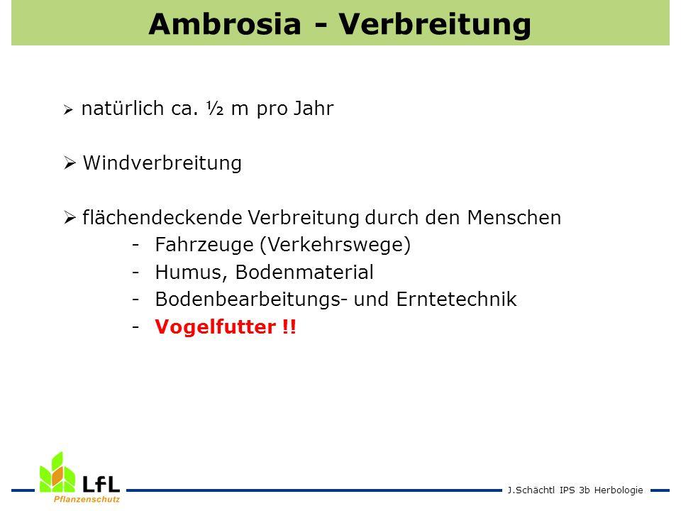 J.Schächtl IPS 3b Herbologie Ambrosia - Verbreitung natürlich ca. ½ m pro Jahr Windverbreitung flächendeckende Verbreitung durch den Menschen - Fahrze
