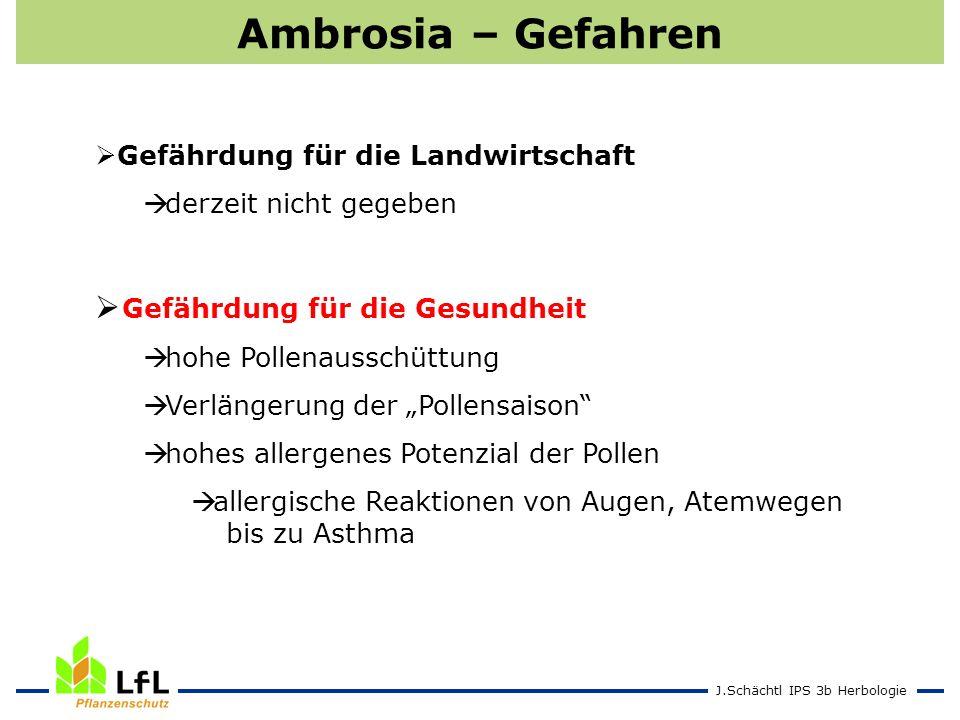 J.Schächtl IPS 3b Herbologie Ambrosia – Gefahren Gefährdung für die Landwirtschaft derzeit nicht gegeben Gefährdung für die Gesundheit hohe Pollenauss