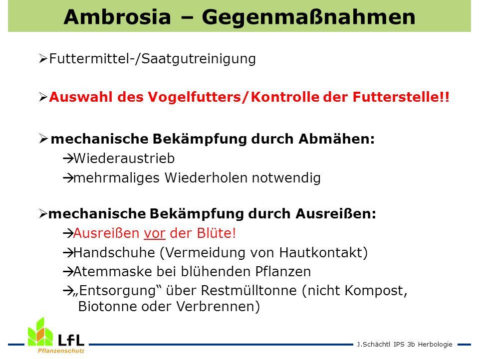 J.Schächtl IPS 3b Herbologie Ambrosia – Gegenmaßnahmen Futtermittel-/Saatgutreinigung Auswahl des Vogelfutters/Kontrolle der Futterstelle!! mechanisch