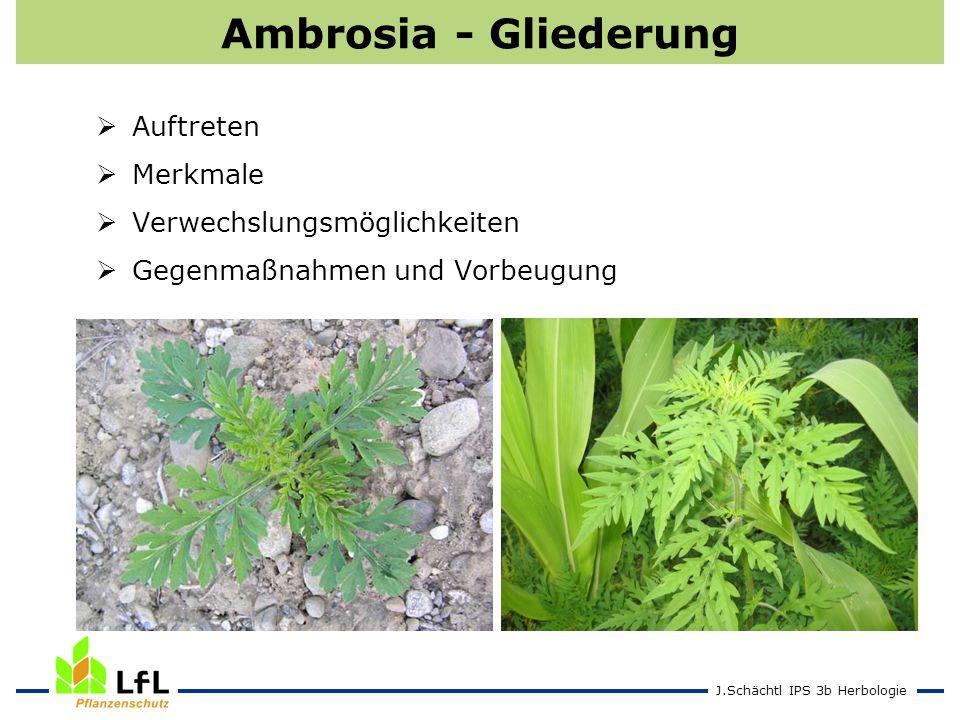J.Schächtl IPS 3b Herbologie Ambrosia - Gliederung Auftreten Merkmale Verwechslungsmöglichkeiten Gegenmaßnahmen und Vorbeugung