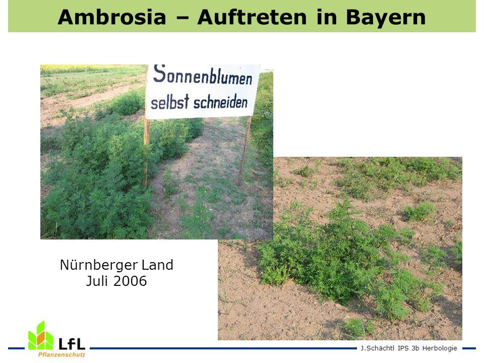J.Schächtl IPS 3b Herbologie Ambrosia – Auftreten in Bayern Nürnberger Land Juli 2006