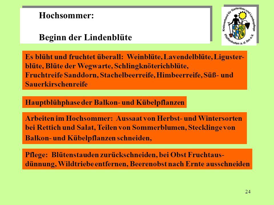 24 Hochsommer: Beginn der Lindenblüte Hochsommer: Beginn der Lindenblüte Es blüht und fruchtet überall: Weinblüte, Lavendelblüte, Liguster- blüte, Blüte der Wegwarte, Schlingknöterichblüte, Fruchtreife Sanddorn, Stachelbeerreife, Himbeerreife, Süß- und Sauerkirschenreife Hauptblühphase der Balkon- und Kübelpflanzen Arbeiten im Hochsommer: Aussaat von Herbst- und Wintersorten bei Rettich und Salat, Teilen von Sommerblumen, Stecklinge von Balkon- und Kübelpflanzen schneiden, Pflege: Blütenstauden zurückschneiden, bei Obst Fruchtaus- dünnung, Wildtriebe entfernen, Beerenobst nach Ernte ausschneiden