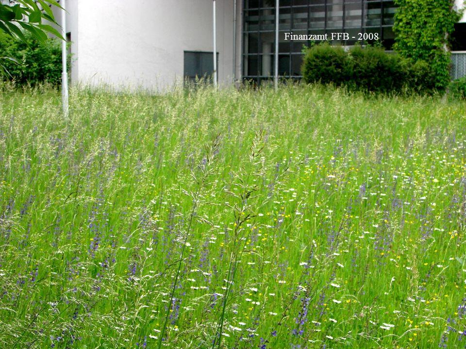 Horst Stegmann, Kreisfachberatung LRA FFB Rasen und Blumenwiese - Anlage und Pflege Finanzamt FFB - 2008