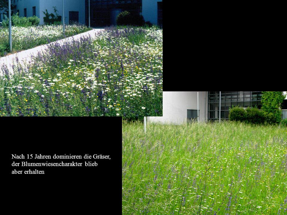 Horst Stegmann, Kreisfachberatung LRA FFB Rasen und Blumenwiese - Anlage und Pflege Nach 15 Jahren dominieren die Gräser, der Blumenwiesencharakter bl