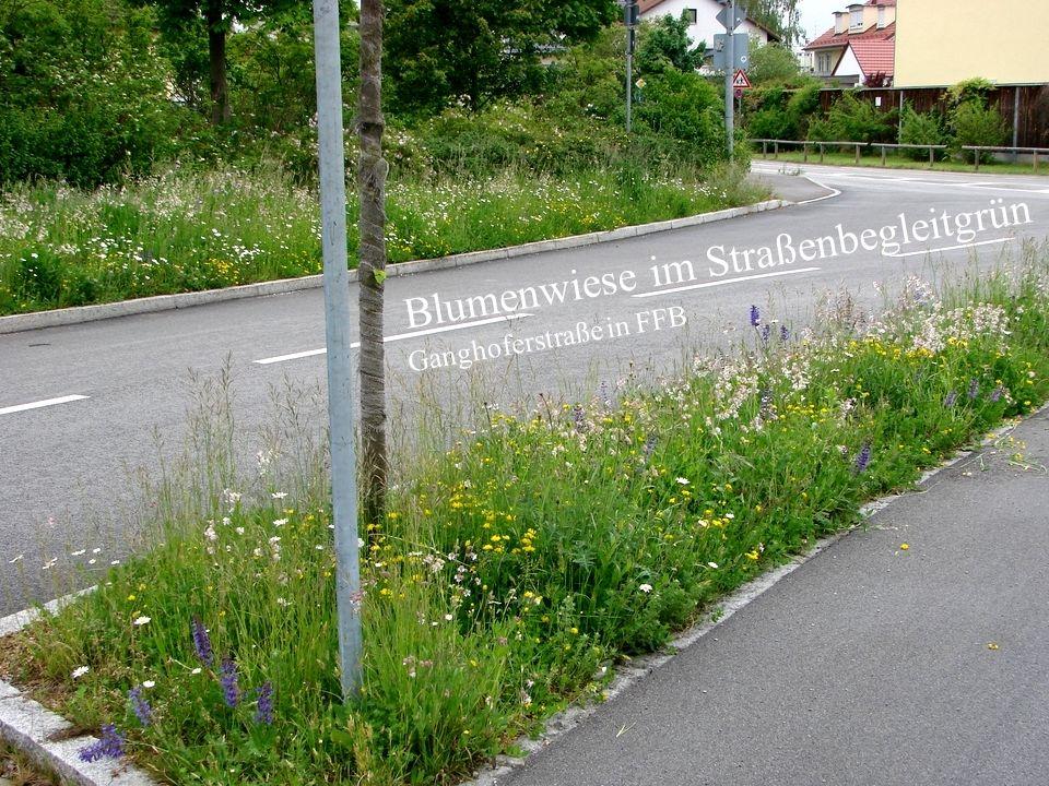 Horst Stegmann, Kreisfachberatung LRA FFB Rasen und Blumenwiese - Anlage und Pflege Blumenwiese im Straßenbegleitgrün Ganghoferstraße in FFB Verkehrsb