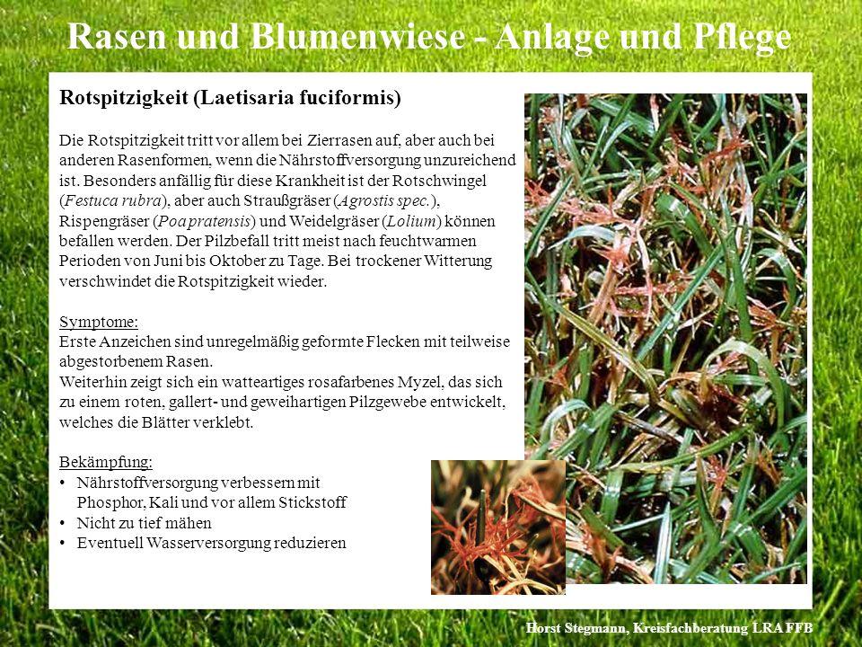 Horst Stegmann, Kreisfachberatung LRA FFB Rasen und Blumenwiese - Anlage und Pflege Die Rotspitzigkeit tritt vor allem bei Zierrasen auf, aber auch be