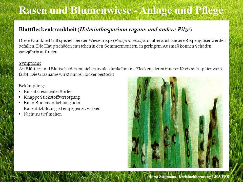 Horst Stegmann, Kreisfachberatung LRA FFB Rasen und Blumenwiese - Anlage und Pflege Diese Krankheit tritt speziell bei der Wiesenrispe (Poa pratensis)