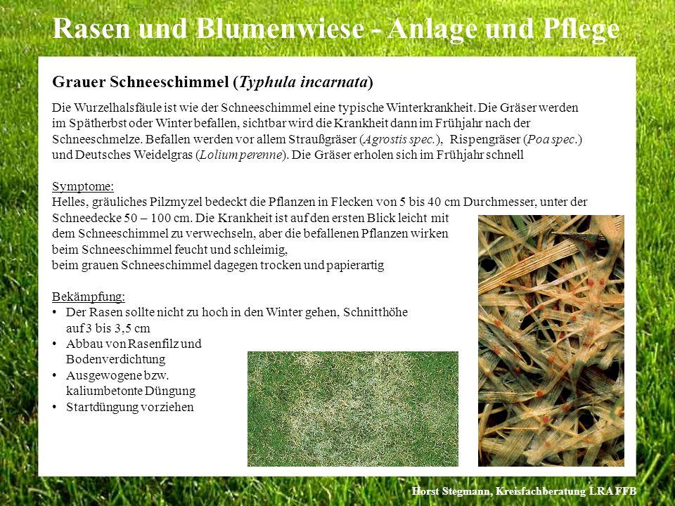 Horst Stegmann, Kreisfachberatung LRA FFB Rasen und Blumenwiese - Anlage und Pflege Die Wurzelhalsfäule ist wie der Schneeschimmel eine typische Winte