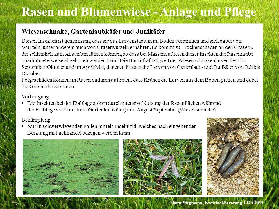 Horst Stegmann, Kreisfachberatung LRA FFB Rasen und Blumenwiese - Anlage und Pflege Diesen Insekten ist gemeinsam, dass sie das Larvenstadium im Boden