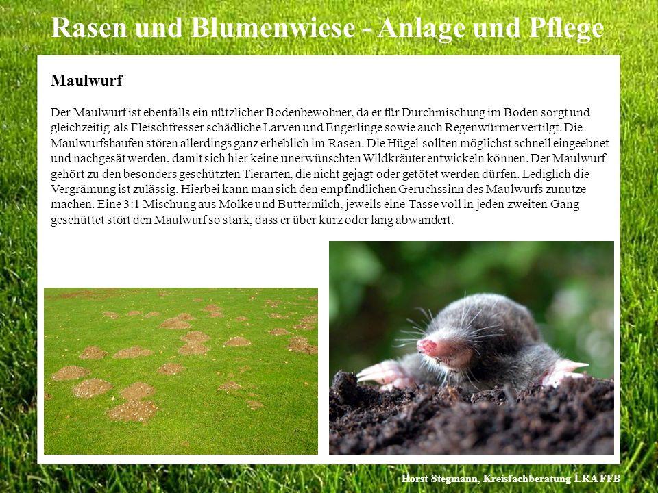 Horst Stegmann, Kreisfachberatung LRA FFB Rasen und Blumenwiese - Anlage und Pflege Der Maulwurf ist ebenfalls ein nützlicher Bodenbewohner, da er für