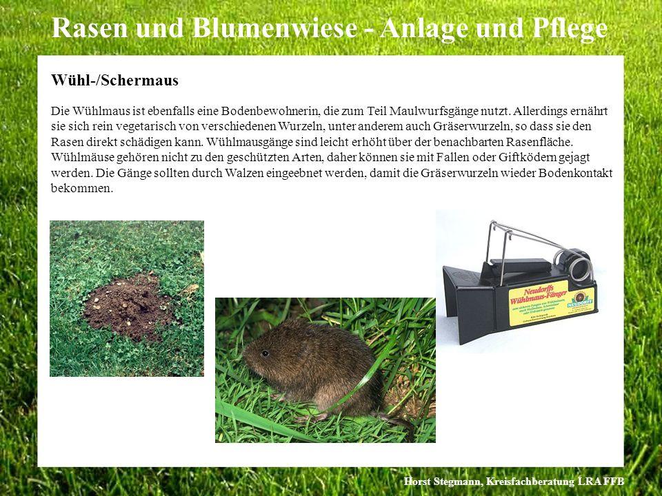 Horst Stegmann, Kreisfachberatung LRA FFB Rasen und Blumenwiese - Anlage und Pflege Die Wühlmaus ist ebenfalls eine Bodenbewohnerin, die zum Teil Maul
