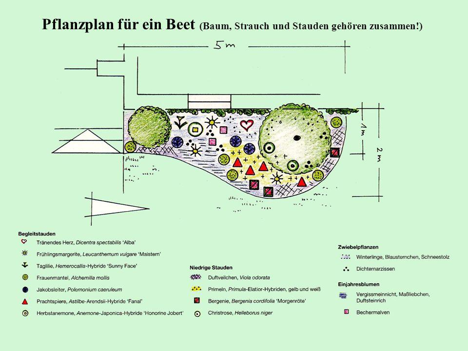 Pflanzplan für ein Beet (Baum, Strauch und Stauden gehören zusammen!)