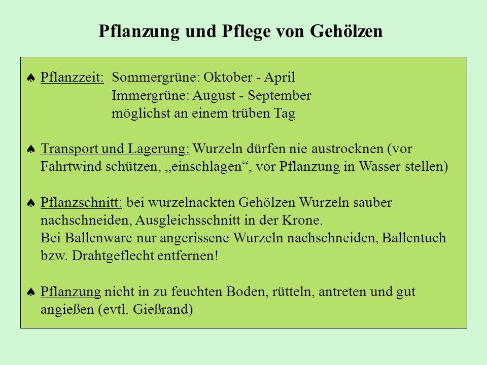 Pflanzzeit:Sommergrüne: Oktober - April Immergrüne: August - September möglichst an einem trüben Tag Transport und Lagerung: Wurzeln dürfen nie austro