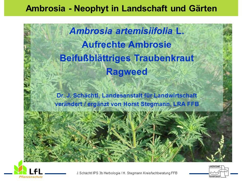 J.Schächtl IPS 3b Herbologie / H. Stegmann Kreisfachberatung FFB Ambrosia artemisiifolia L. Aufrechte Ambrosie Beifußblättriges Traubenkraut Ragweed D