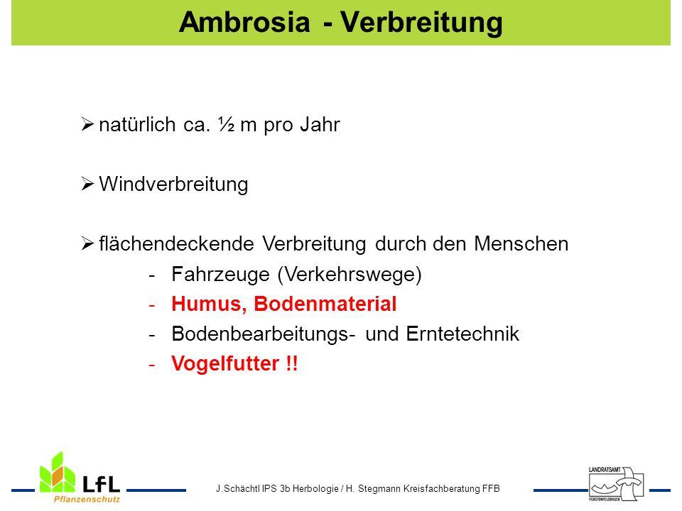 J.Schächtl IPS 3b Herbologie / H. Stegmann Kreisfachberatung FFB Ambrosia - Verbreitung natürlich ca. ½ m pro Jahr Windverbreitung flächendeckende Ver