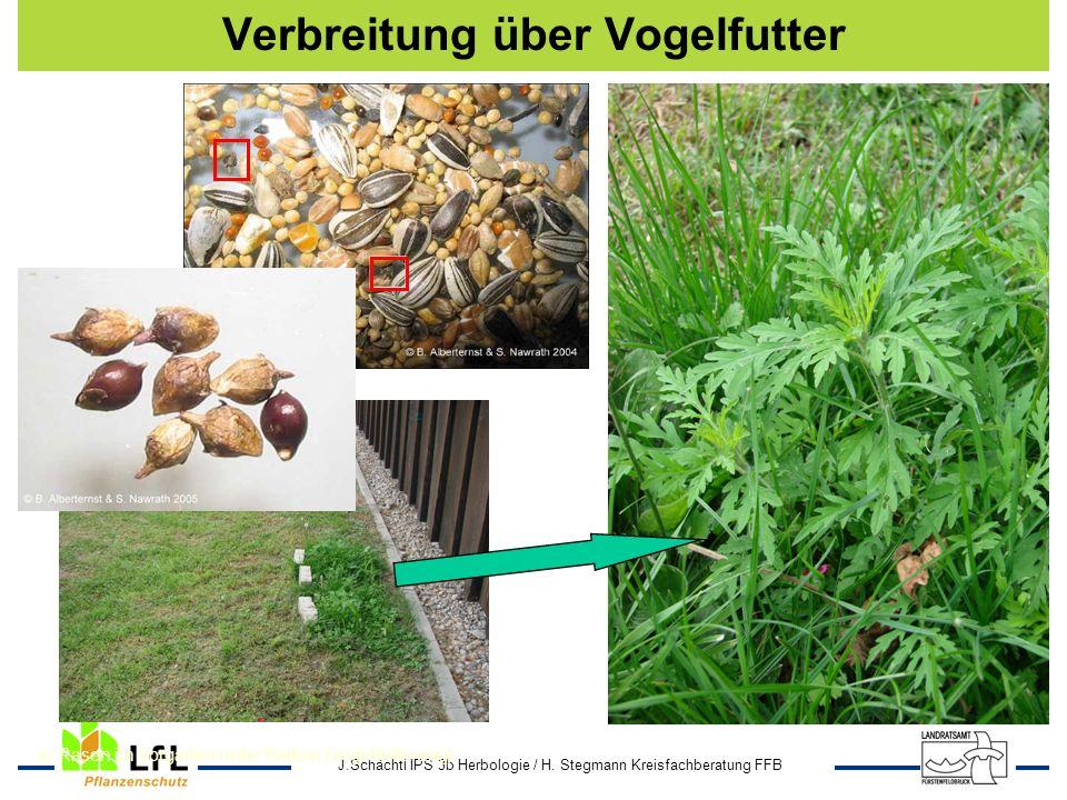 J.Schächtl IPS 3b Herbologie / H. Stegmann Kreisfachberatung FFB In Rasen im Vorgarten unter Balkon (Vogelfütterung) Verbreitung über Vogelfutter