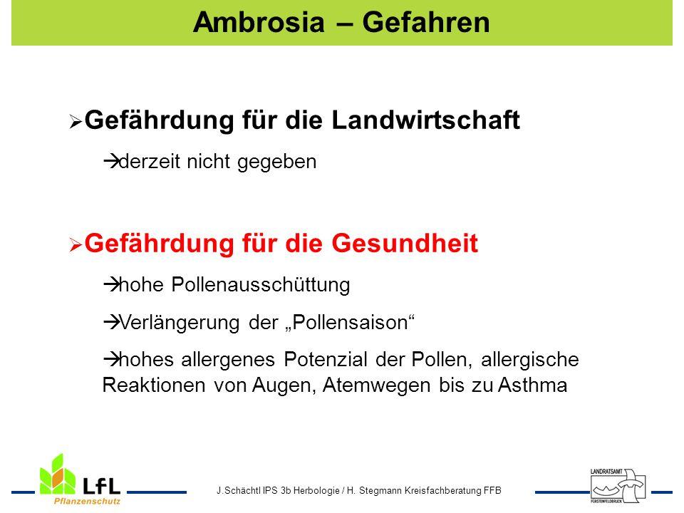 J.Schächtl IPS 3b Herbologie / H. Stegmann Kreisfachberatung FFB Ambrosia – Gefahren Gefährdung für die Landwirtschaft derzeit nicht gegeben Gefährdun
