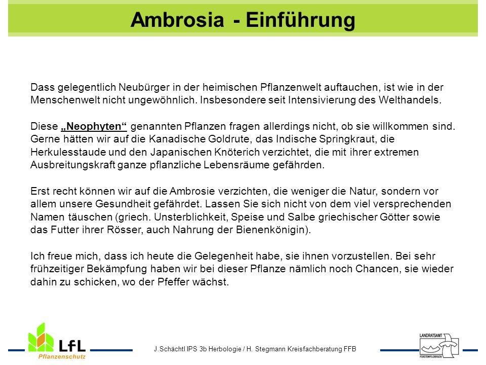J.Schächtl IPS 3b Herbologie / H. Stegmann Kreisfachberatung FFB Ambrosia - Einführung Dass gelegentlich Neubürger in der heimischen Pflanzenwelt auft